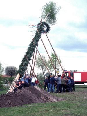 Kameraden beim Stellen des Maibaumes